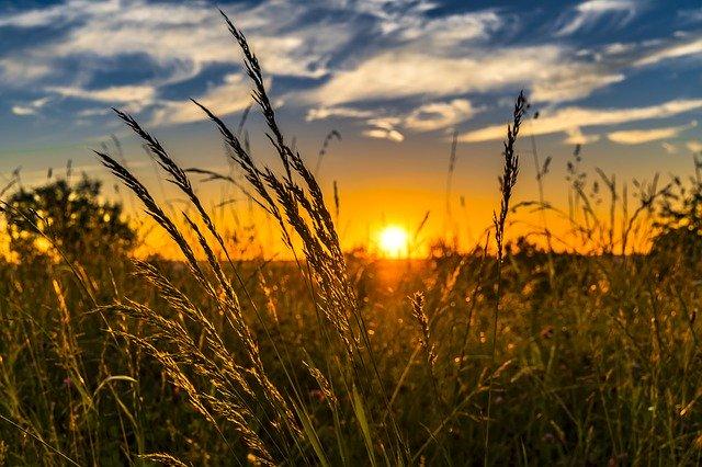 Stymulatory wzrostu w branży rolniczej